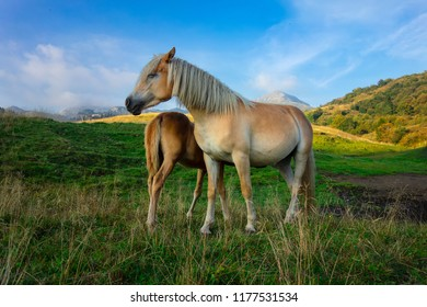Mum horse with the little one in the mountain pastures.