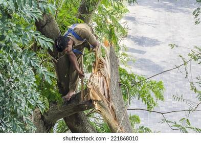 Mumbai, India - October 2, 2014 -  Man cutting falling tree after heavy  thunder storm