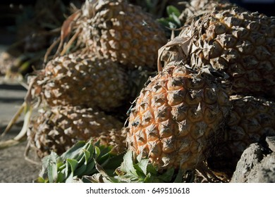 MUMBAI, MAHARASHTRA / INDIA - OCTOBER 26, 2007 : CLOSE UP VIEW OF A  PINEAPPLE FRUIT FOR SALE IN CRAWFORD MARKET.