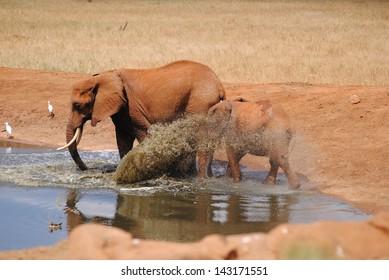 Mummy and Baby Elephant Splash