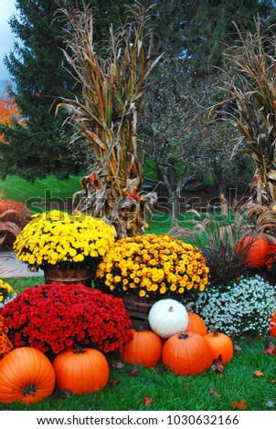 Mums Pumpkins Corn Stalks Complete Autumn Stock Photo Edit Now