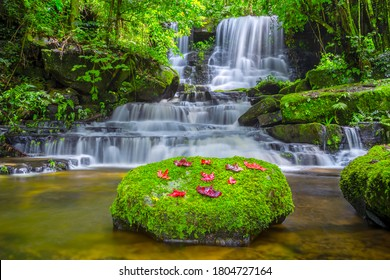 Mun dang or Man dang waterfall with a pink flower foreground in Rain Forest at Phitsanulok Province, Thailand