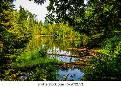 Mundy Park Lake, Coquitlam, BC, Canada