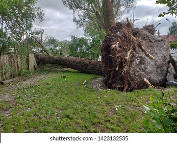 Munich, Bavaria/Germany - 06.10.2019: In the north-west of Munich massive hail and storm damages took place on witmonday. Strong trees had been pulled out and the tarseal broke.