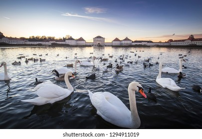 Munich, Germany - December 8, 2017:Swans on the lake at Nymphenburg Palace