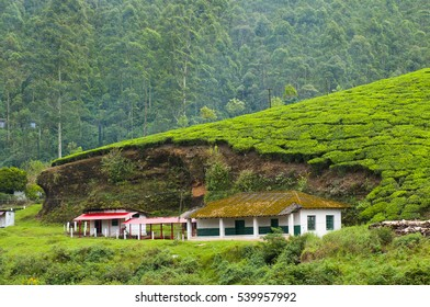 MUNNAR, KERALA, INDIA - 5 NOVEMBER 2015 : Tea plantation with tea factory at Munnar, Munnar is best known as India's tea capital.