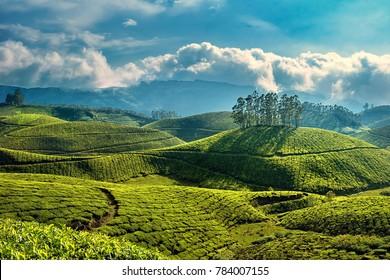 Munnar, Kerala, India - October 12, 2007 : A picturesque view of landscapes of hillocks with tea plantations at Munnar,