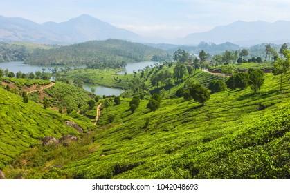 Munnar, Kerala, India. View across tea plantation and lakes deep in the valleys of the Kannann Devan Hills in Munnar, Kerala, India.