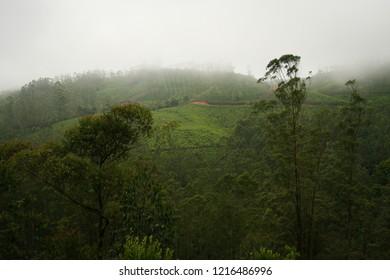 Munnar landscape in india