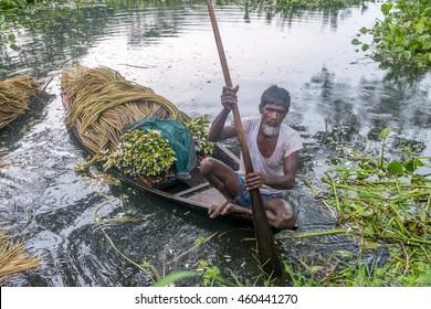 Munshigonj, Bangladesh - July 29, 2016: Bangladeshi farmer sitting on a boat, picking water lily  in munshigonj, bangladesh on July 29, 2016