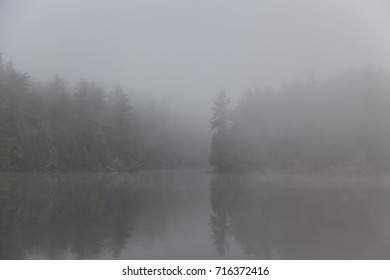 The murky shore of a quiet lake in the morning fog.