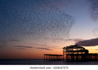 Murmuration over the ruins of Brighton and Hove's West Pier on the south coast of England. A flock starlings perform aerial acrobatics over the pier at sunset.