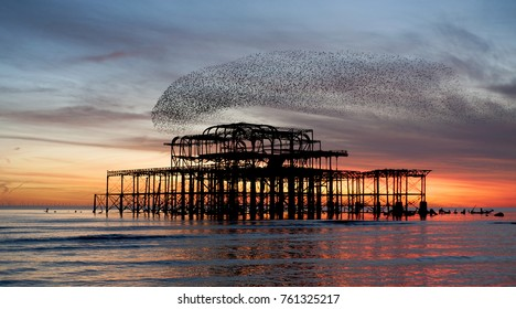 Murmuration over the ruins of Brighton and Hove's West Pier on the south coast of England. Aerial acrobatics of a flock of starlings over the pier at sunset.