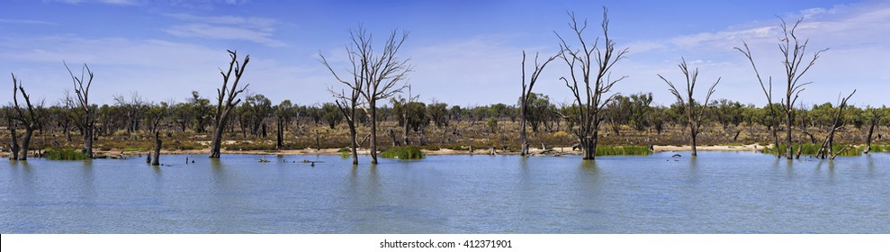 Murray river wide panoramic view across water way with flat opposite river side covered by dead trees and live birds.