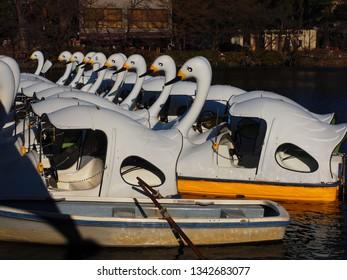 Musashino city Tokyo,Japan/Jan 11,2019: white swan boats on pond at Inokashira park