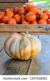 Muscade de Provence or fairytale pumpkins (Cucurbita moschata). Pumpkins from autumn harvest on the wooden table. Red Kuri squashes (Red Hokkaido) in the blurred background