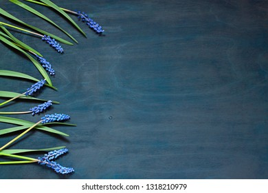 Muscari flowers on the dark blue background. Floral frame