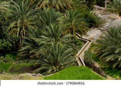 Muscat, Oman. May 29th 2014Traditional Aflaj Irrigation System in a date palm garden near Muscat, Oman.