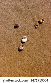 Muschel am sandigen Ufer des Flusses