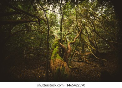 muscled tree in the mistic forest