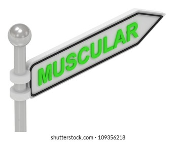 MUSCULAR arrow sign with letters on isolated white background