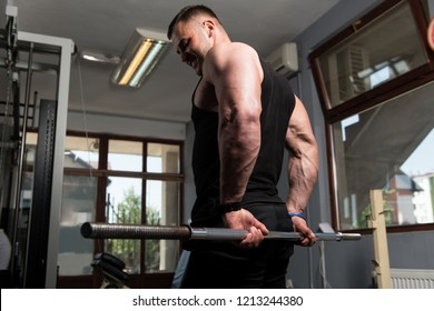 Muscular Man Doing Heavy Weight Exercise For Forearm With Barbell In Gym