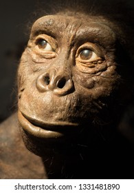 Museum of Evolution, Palace of Culture and Science, Warsaw, Poland - April 8, 2018: Photographic portrait of an exhibit - australopithecus Lucy - a reconstruction of the appearance.