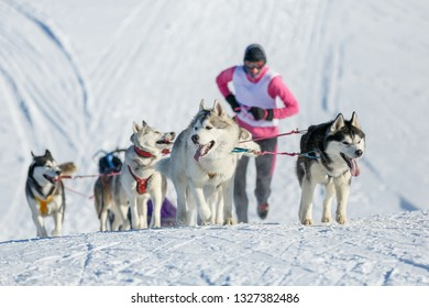 Musher runs for a sled, driven by Husky dogs