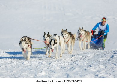 Musher and Siberian husky team at snow winter competition