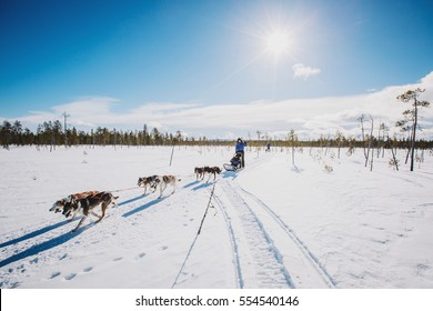 mushers with sled dog. race on snow in winter