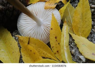 Mushroom autumn season