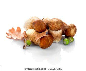Mushroom Boletus isolated on White Background. Autumn Cep Mushrooms. Ceps Boletus edulis over White Background, close up on the table. Cooking delicious organic mushroom. Gourmet food.