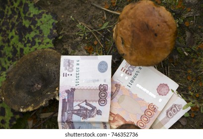 Mushroom cultivation the money next Finance and banking concept.
