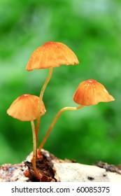 Mushroom in deep forest