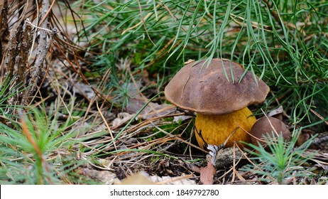 Mushroom in the fall rorest. Forest magic