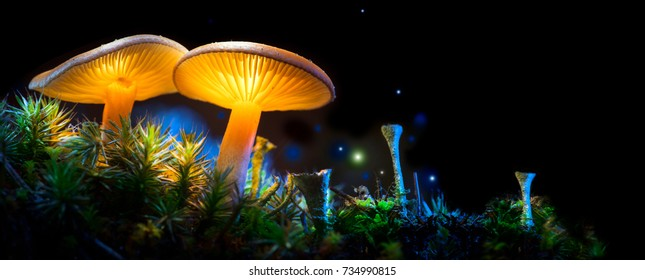 Mushroom. Fantasy Glowing Mushrooms in mystery dark forest close-up. Beautiful macro shot of magic mushroom, fungus. Border art design. Magic scene, light in night forest. Wide banner.