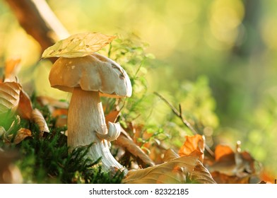 mushroom in forest close up