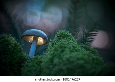 Mushroom, glowing fantasy world in the evening  forest