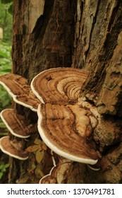 Mushroom growing on a tree.