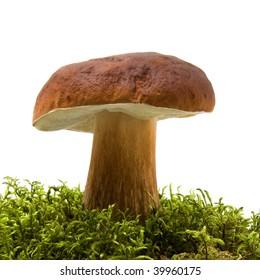 mushroom isolated on white