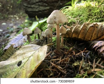 Mushroom on the forest floor