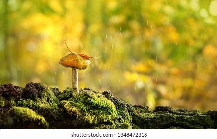 schöner Pilz im Gras, Herbstsaison. kleiner frischer Pilz auf Moos, der im Herbstwald wächst. Pilze und Blätter in Regen im Wald. Konzept zur Auswahl von Pilzen. Kopienraum