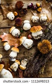 Mushroom  over Wooden Background. Autumn Cep Mushrooms on wood. Autumn forest fruit