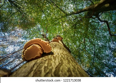 Mushroom photographed from below towards the green foliage with its tree crown and branches against a sunny background