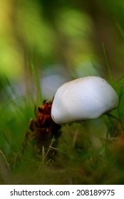 Mushroom and pine cone in the lawn