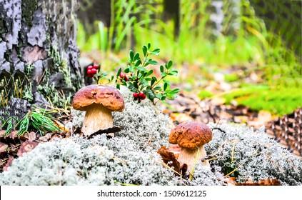 Mushroom in plant moss forest scene