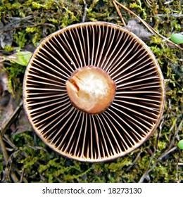 mushroom rests upon moss