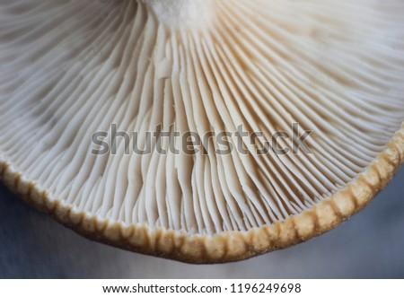 Mushroom Spores Super Macro Macro Mushroom Stock Photo Edit Now