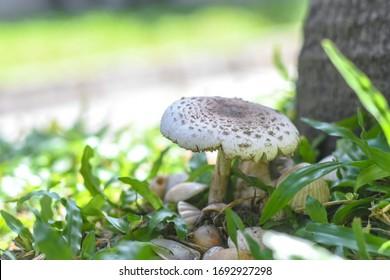 Mushroom, surrounded by sea shells.