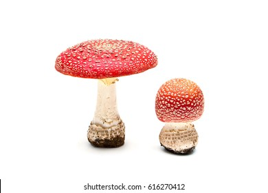 mushroom and toadstool on a white background